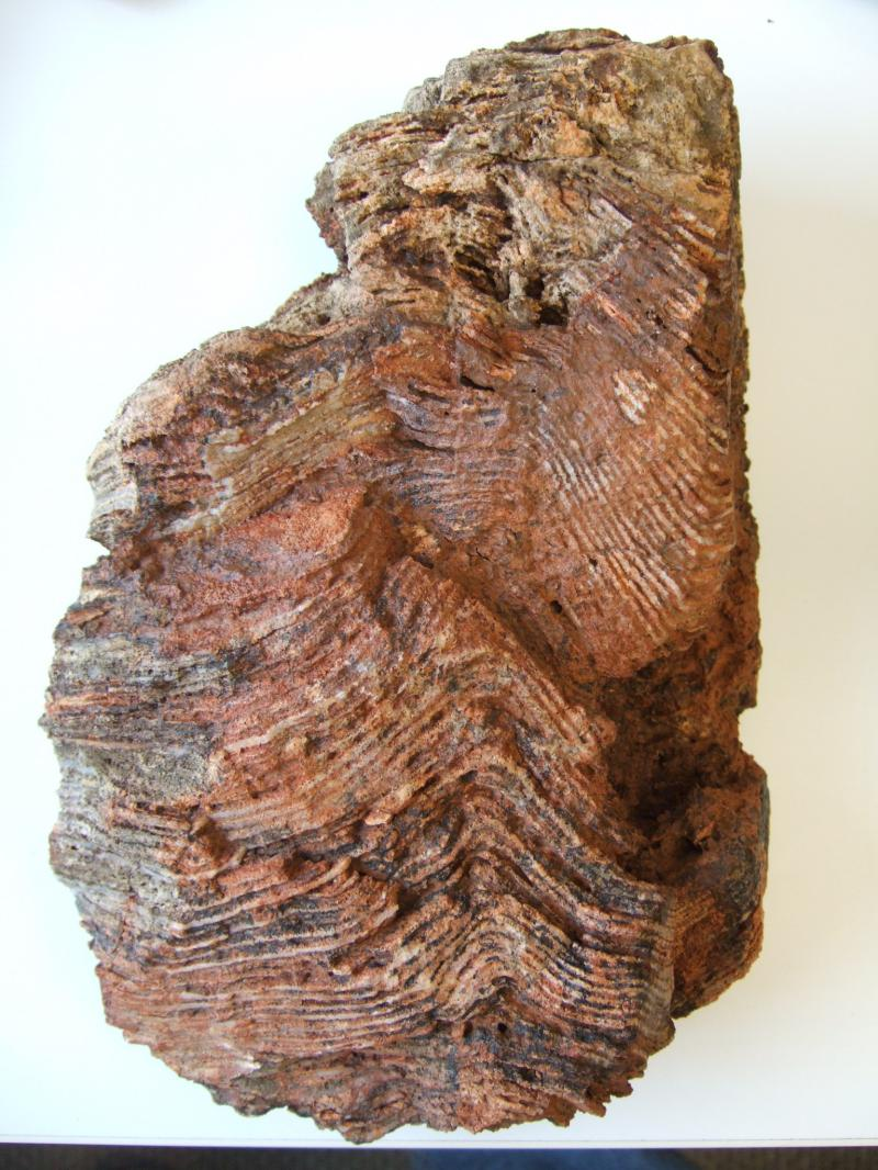 Archean Stromatolite Fossil, Genesis Creation, Bible, Geology