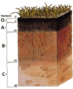 Soil Profile, U.S. Department of Agriculture, Biblical Creation Day 3, Genesis
